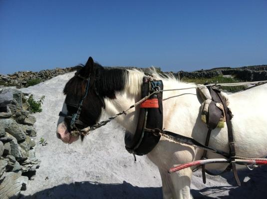 Our Pony, Jack